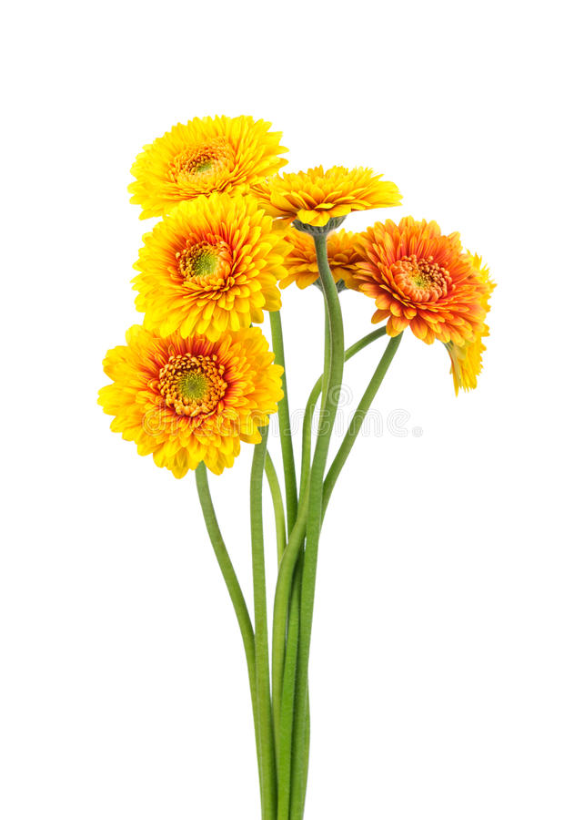 Mazzo dei fiori di Gerber immagine stock libera da diritti