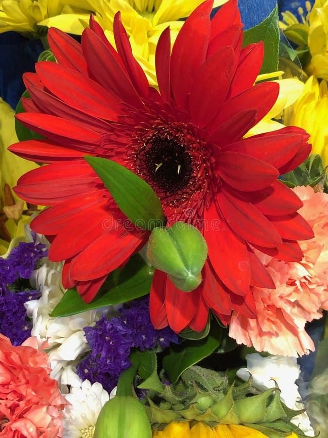 Mazzo dei fiori differenti di un colore fotografia stock libera da diritti