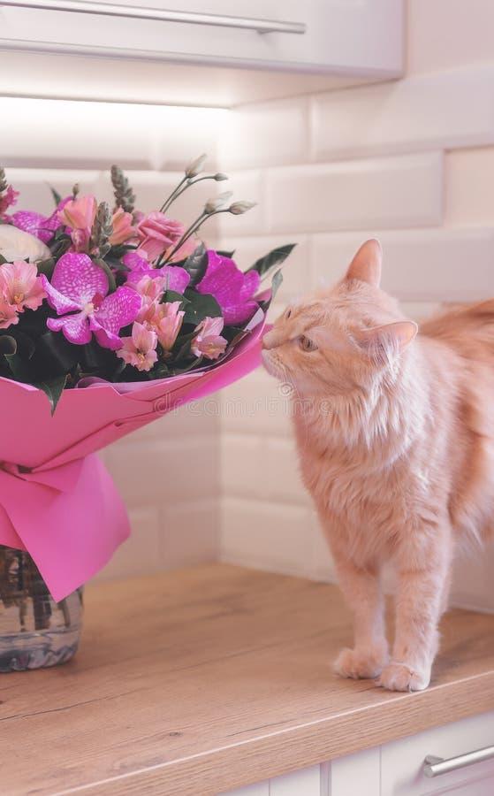 Mazzo dei fiori e di un gatto Regalo ed animale domestico orchids fotografia stock