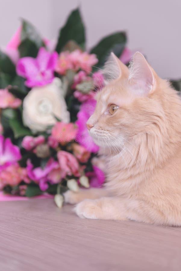 Mazzo dei fiori e di un gatto Regalo ed animale domestico orchids fotografia stock libera da diritti