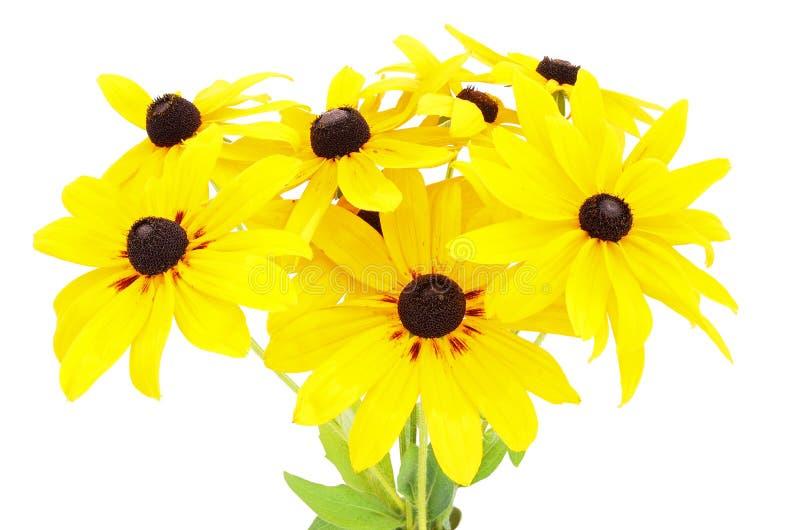 Mazzo dei fiori gialli di rudbeckia fotografia stock libera da diritti