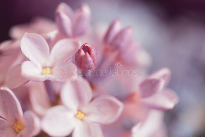 Download Mazzo dei fiori lilla fotografia stock. Immagine di fragrante - 117976314