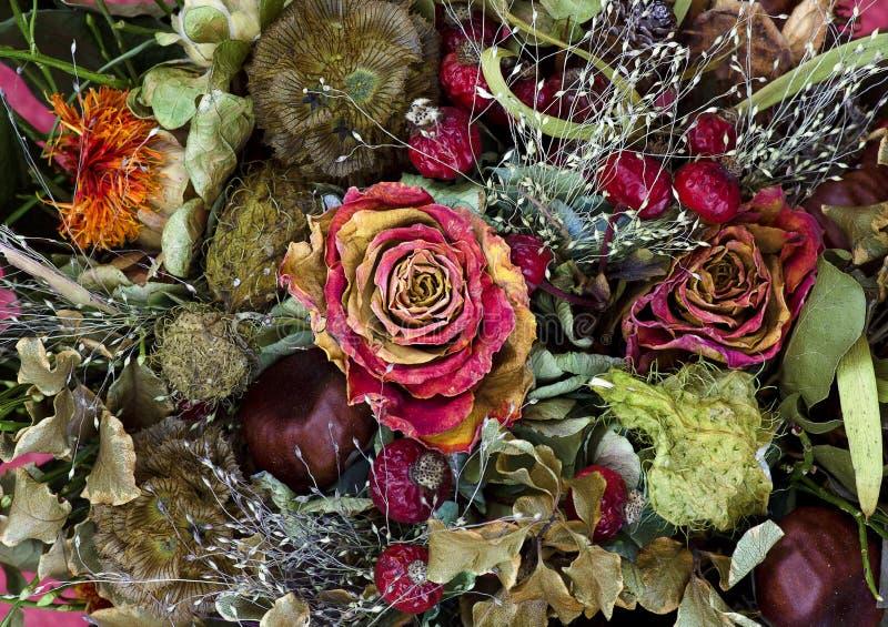 mazzo dei fiori secchi fotografia stock libera da diritti