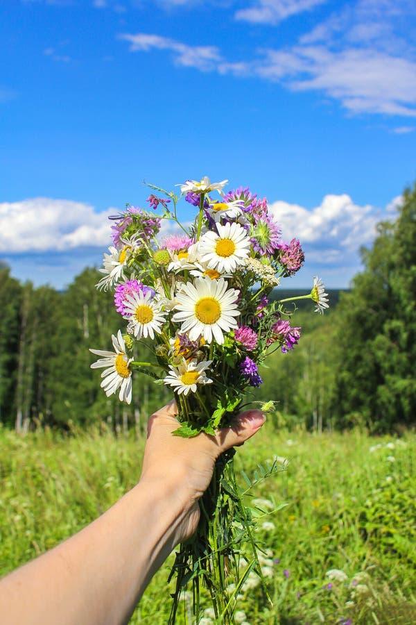 Mazzo dei fiori selvaggi a disposizione contro il cielo blu Umore di estate fotografia stock