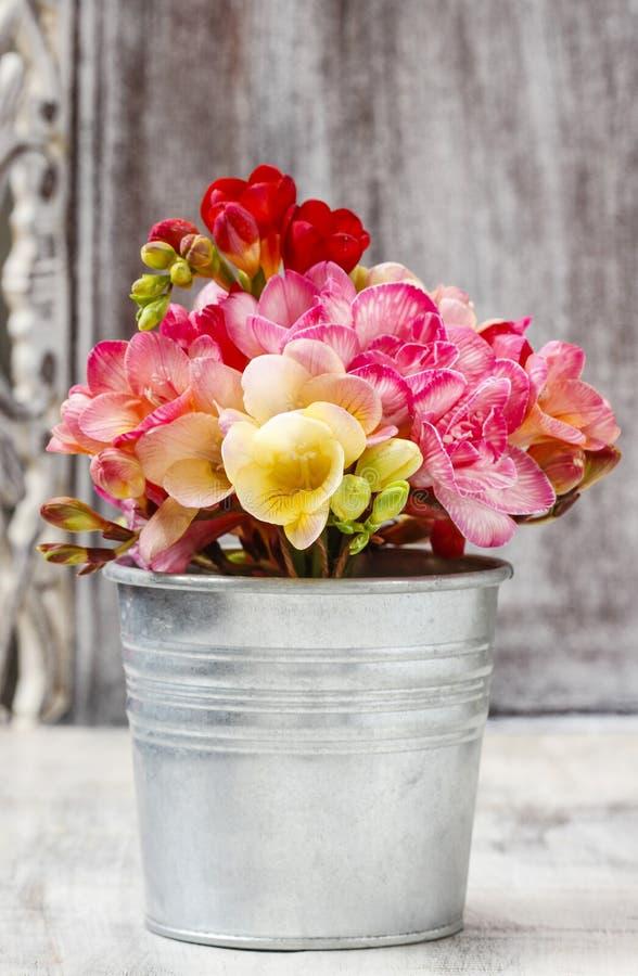 Mazzo dei fiori variopinti di fresia fotografia stock libera da diritti