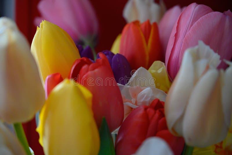 Mazzo dei fiori variopinti di Pasqua fotografia stock