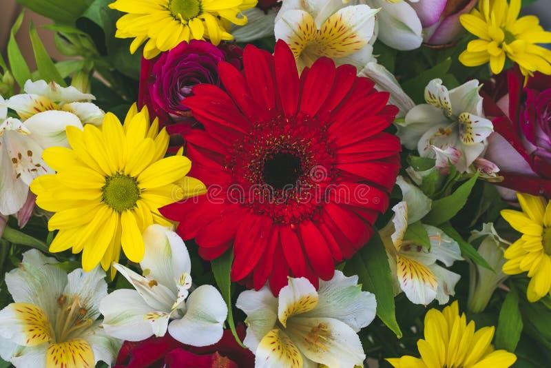 Mazzo dei fiori variopinti per progettazione della decorazione Daisy Background Celebrazione di festa Primo piano sui fiori giall fotografie stock libere da diritti