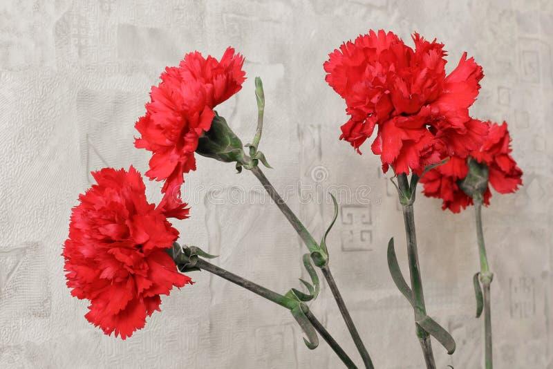 Mazzo dei garofani rossi I chiodi di garofano si chiudono su immagine stock libera da diritti