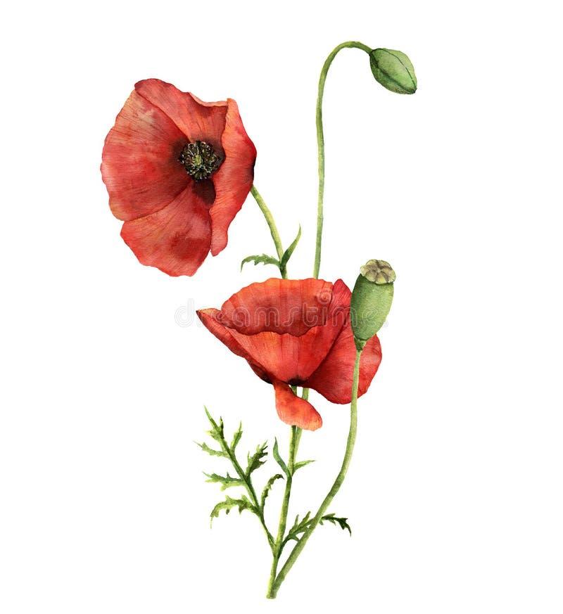Mazzo dei papaveri dell'acquerello Illustrazione floreale dipinta a mano con le foglie, la capsula del seme ed i rami isolati su  illustrazione di stock