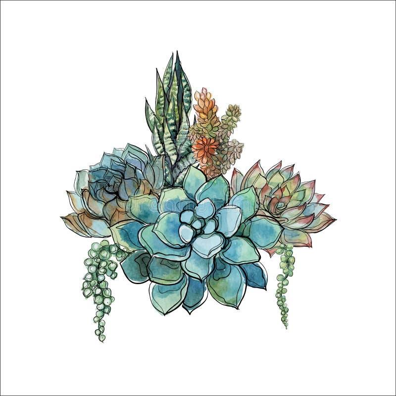 Mazzo dei succulenti Disposizione dei fiori per progettazione watercolor grafici Vettore immagine stock libera da diritti