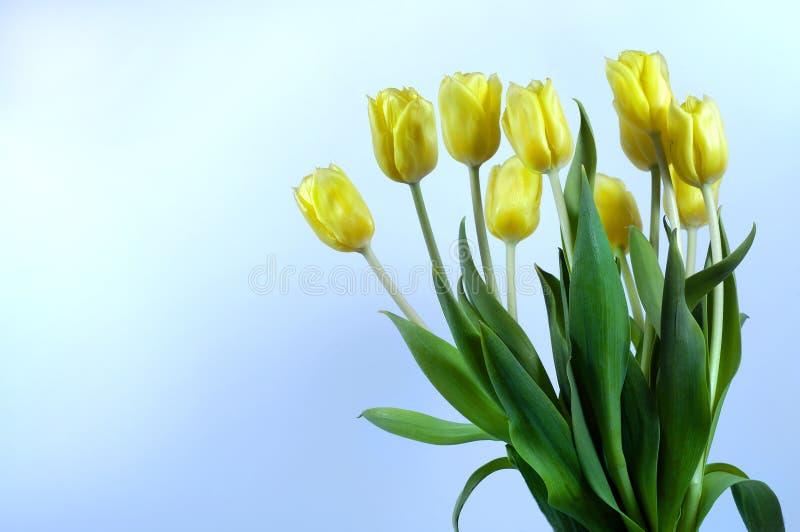 Mazzo dei tulipani immagini stock