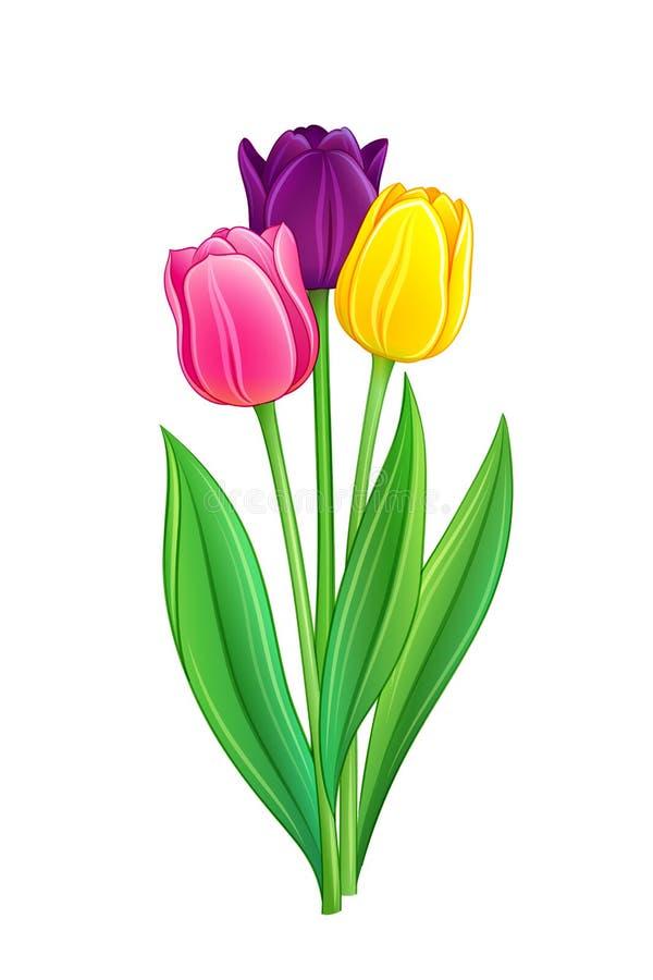Mazzo dei tulipani royalty illustrazione gratis
