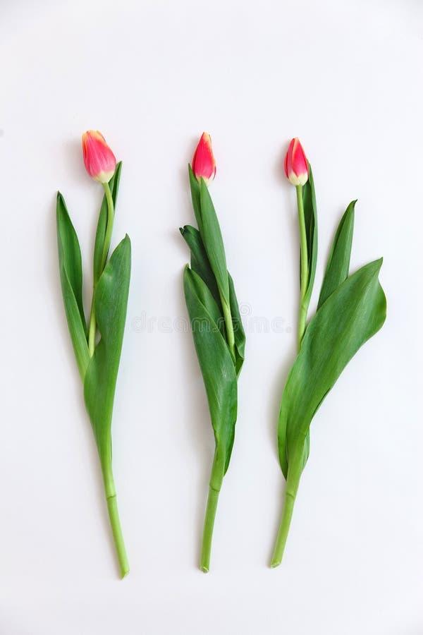 Mazzo dei tulipani colorati su un fondo bianco Piovuto appena sopra Tulipani colorati, composizione adorabile nei fiori del tulip fotografia stock