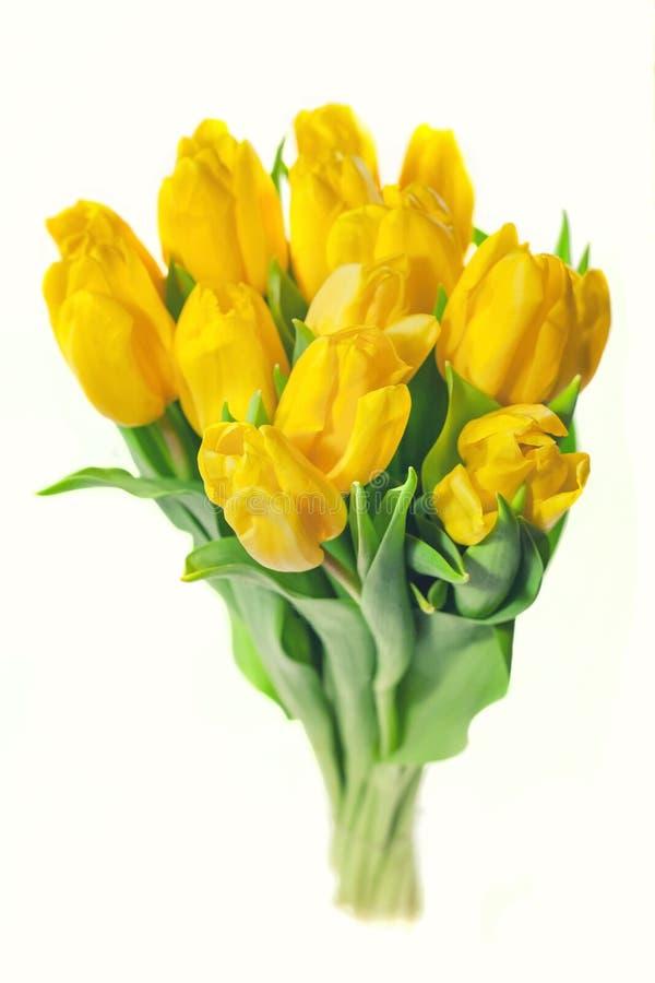 Mazzo dei tulipani gialli isolati su fondo bianco Fondo di giorno del ` s di giorno e della madre del ` s del biglietto di S. Val immagine stock