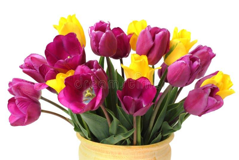 Mazzo dei tulipani porpora e gialli fotografia stock libera da diritti