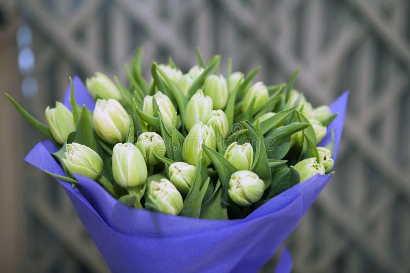 Download Mazzo Dei Tulipani Unblown Verdi In Carta Porpora Del Mestiere Per Fotografia Stock - Immagine di mazzo, celebrazione: 117978010