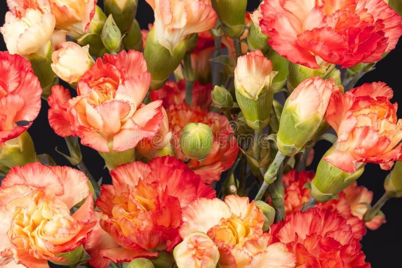 Mazzo del dianthus caryophyllus rosso del garofano fotografia stock