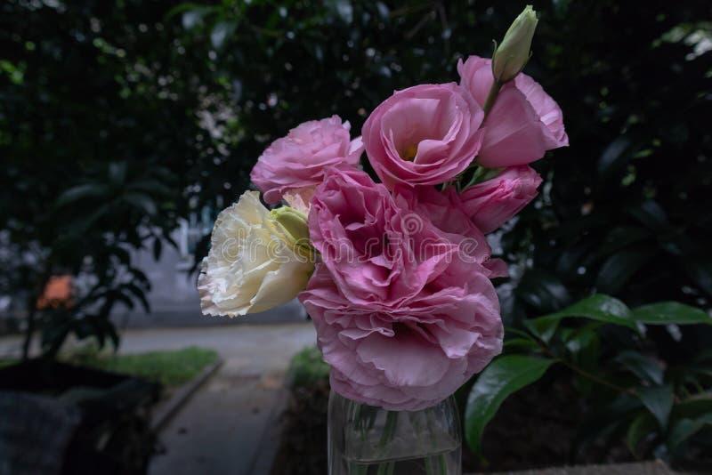 Mazzo del fiore dei fiori recisi grandiflorum-freschi di Platycodon fotografia stock libera da diritti
