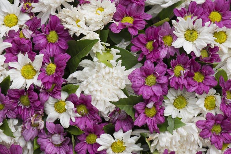 Mazzo del fiore di Dendranthemum immagini stock