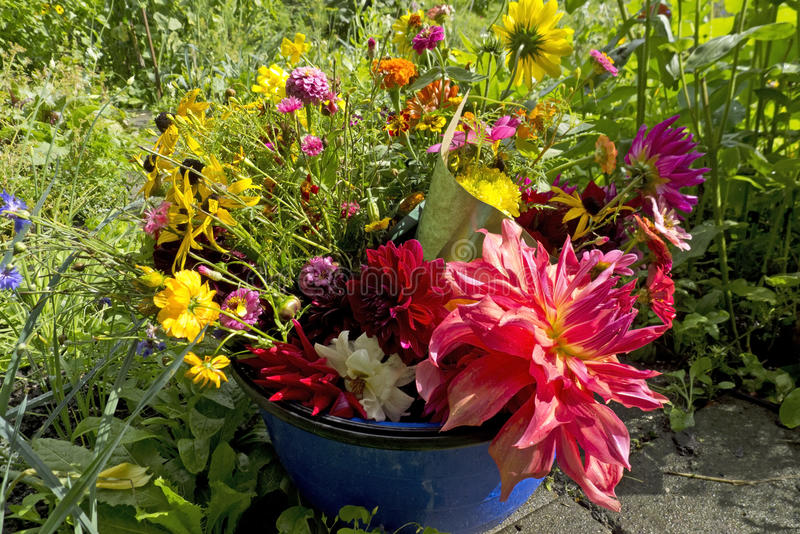Mazzo del giardino di estate con la dalia fotografia stock libera da diritti