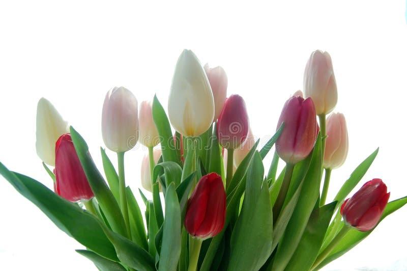 Mazzo del tulipano fotografie stock libere da diritti