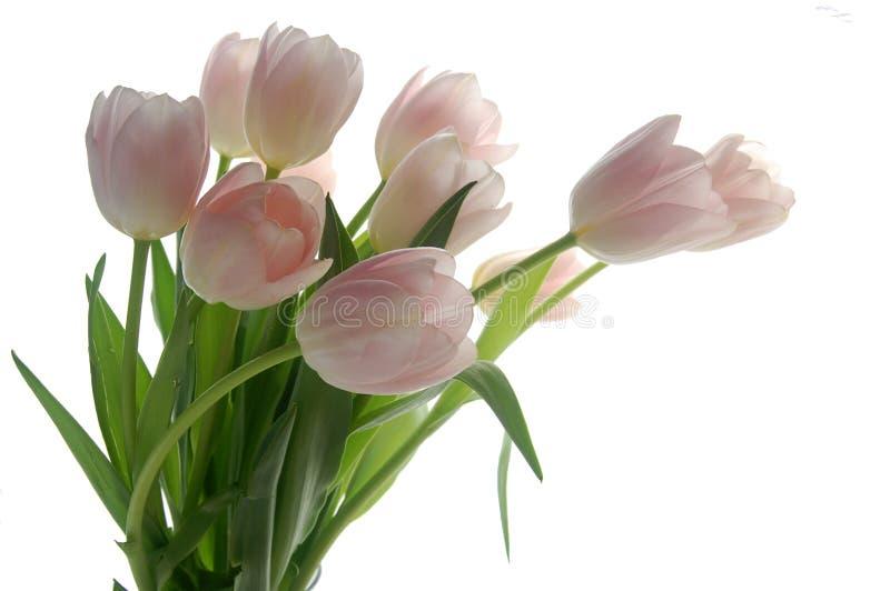 Mazzo del tulipano fotografia stock libera da diritti