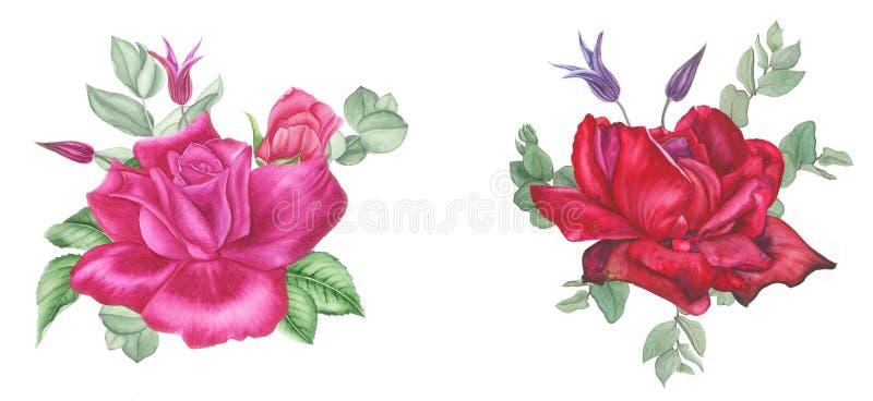 Mazzo dell'acquerello con le rose, la clematide e l'eucalyptus rosa Per le stampe ed il tessuto illustrazione vettoriale