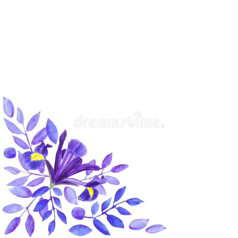 Mazzo dell'acquerello delle iridi, dell'illustrazione floreale disegnata a mano, dei fiori blu e delle foglie su fondo bianco illustrazione vettoriale