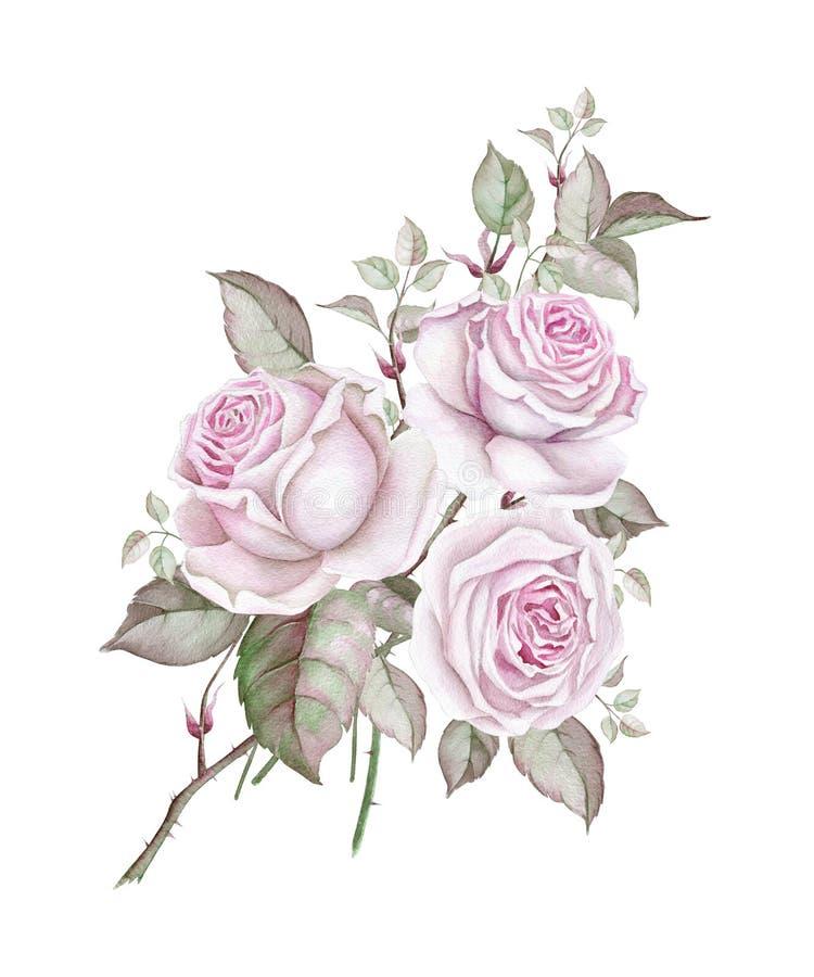 Mazzo dell'acquerello delle rose d'annata delicate su bianco illustrazione di stock