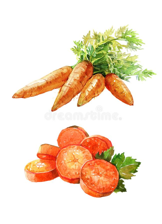 Mazzo dell'acquerello di carote isolate su un'illustrazione bianca del fondo illustrazione di stock