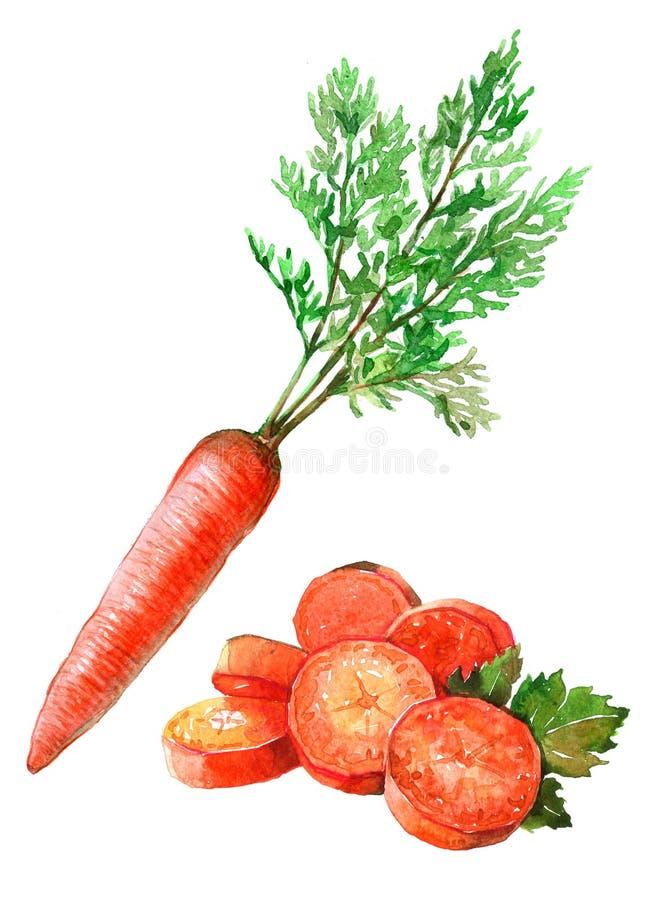 Mazzo dell'acquerello di carote isolate su un'illustrazione bianca del fondo royalty illustrazione gratis