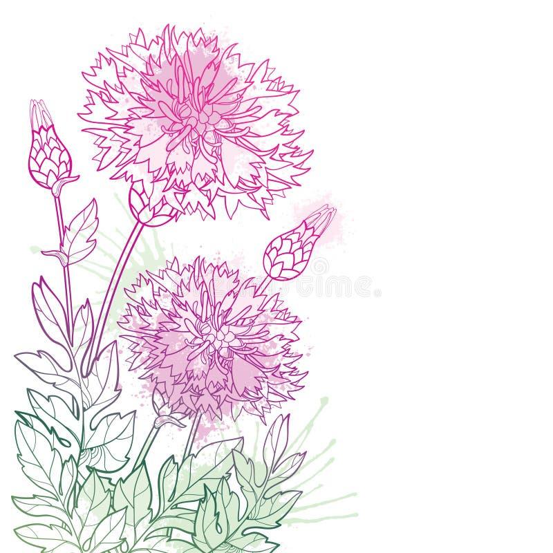 Mazzo dell'angolo di vettore del dealbata della centaurea del profilo o fiordaliso, germoglio persiano e foglia in rosa pastello  illustrazione vettoriale