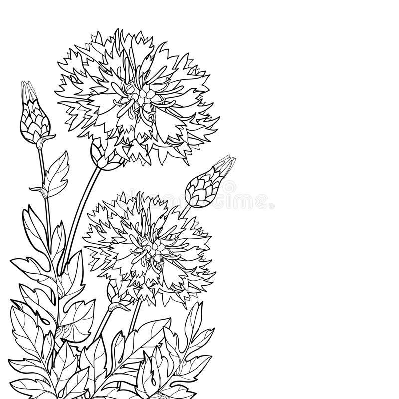 Mazzo dell'angolo di vettore del dealbata della centaurea del profilo o fiore del fiordaliso, germoglio persiano e foglia nel ner illustrazione vettoriale