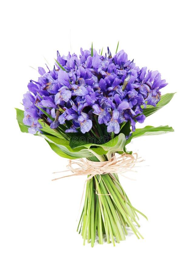 Mazzo dell'iride dei fiori immagine stock libera da diritti