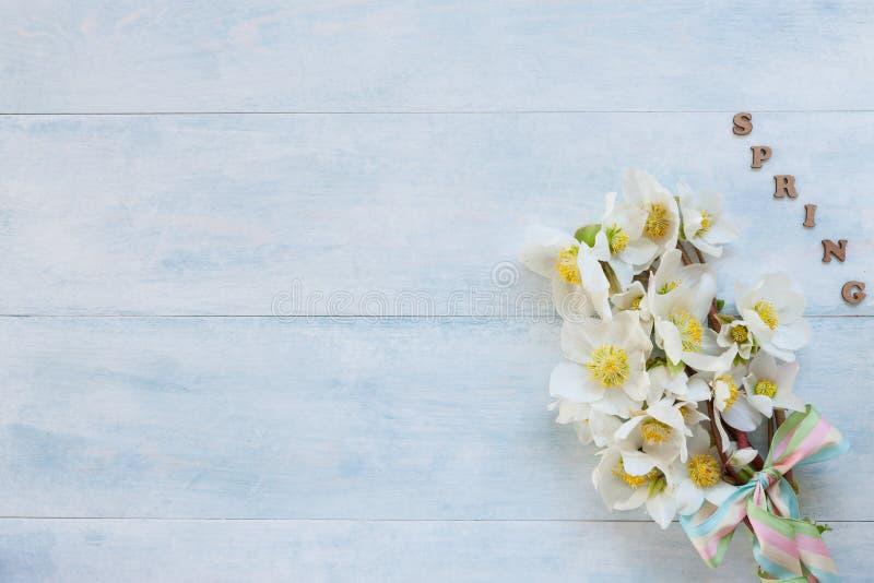 Mazzo della foto A del primo piano dei fiori freschi dell'elleboro della molla su fondo di legno blu-chiaro fotografia stock