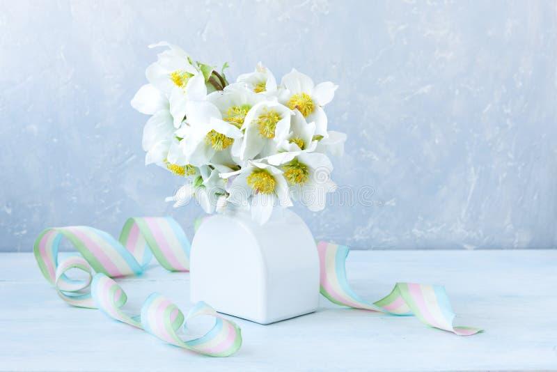 Mazzo della foto A del primo piano dei fiori freschi dell'elleboro della molla in un vaso bianco immagini stock libere da diritti