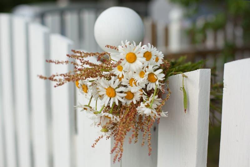 Mazzo delle margherite sul recinto di legno bianco fotografia stock