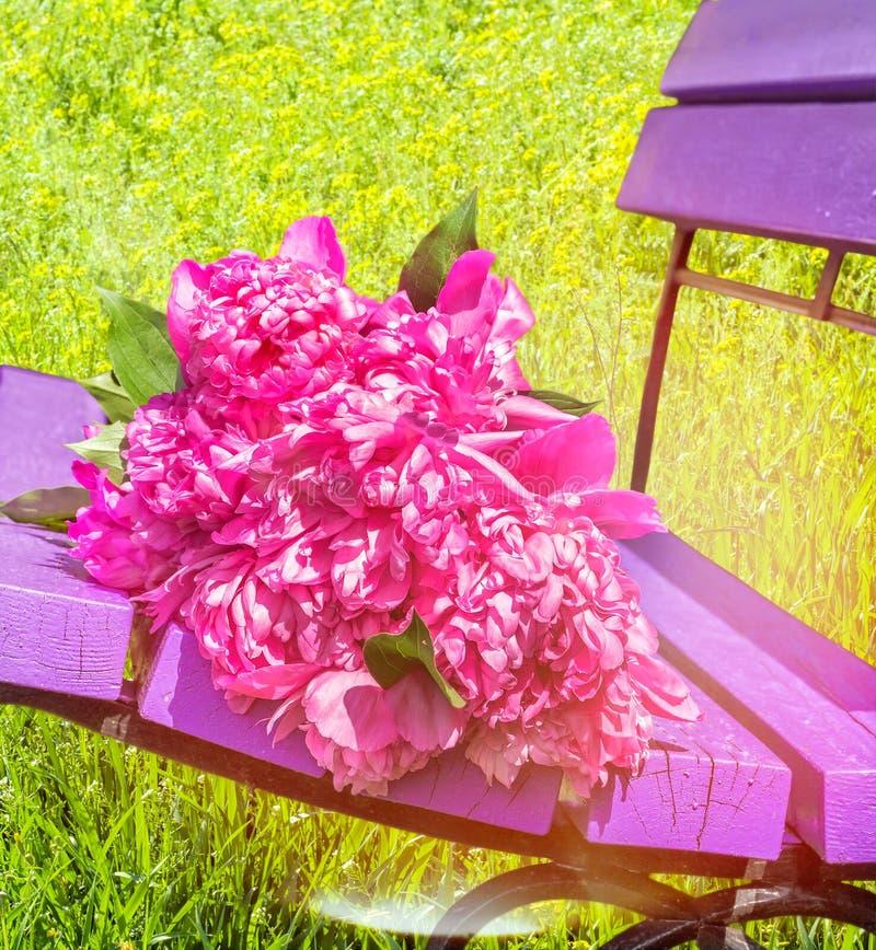 Mazzo delle peonie rosa su un banco su un prato inglese fotografia stock libera da diritti