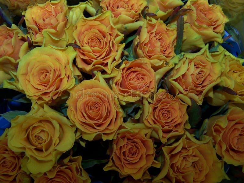 Mazzo delle rose gialle fotografia stock libera da diritti
