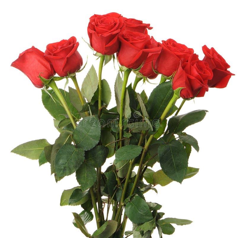 Mazzo delle rose rosse immagine stock