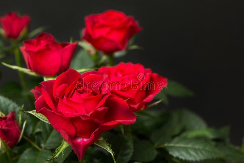 Mazzo delle rose rosse su un fondo nero immagini stock