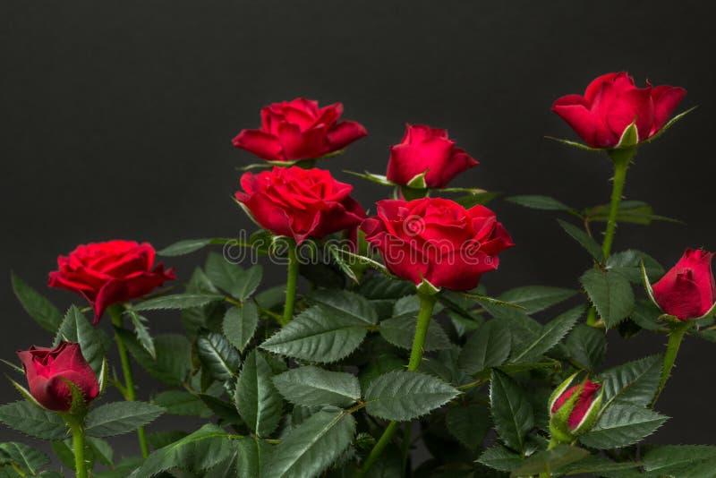 Mazzo delle rose rosse su un fondo nero fotografia stock libera da diritti