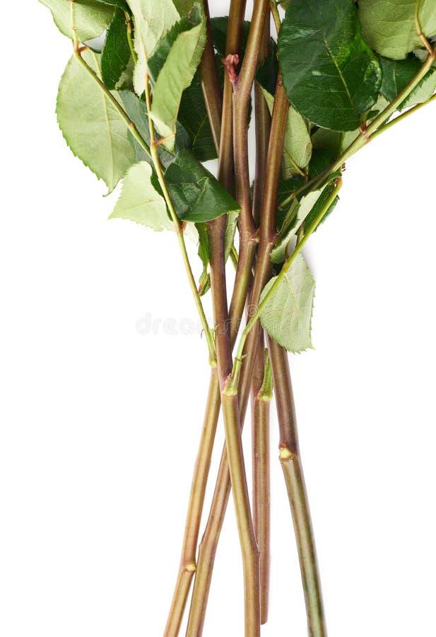 Mazzo delle rose sopra fondo isolato bianco fotografia stock