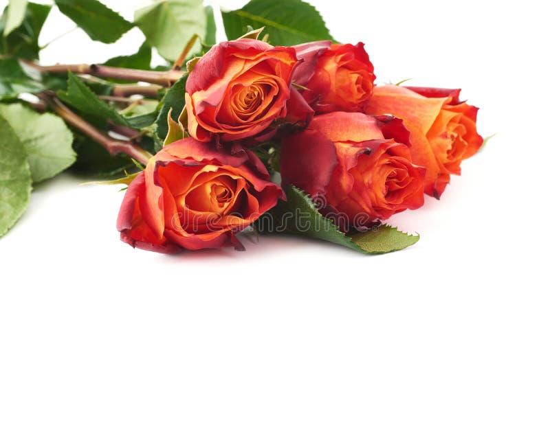 Mazzo delle rose sopra fondo isolato bianco immagine stock
