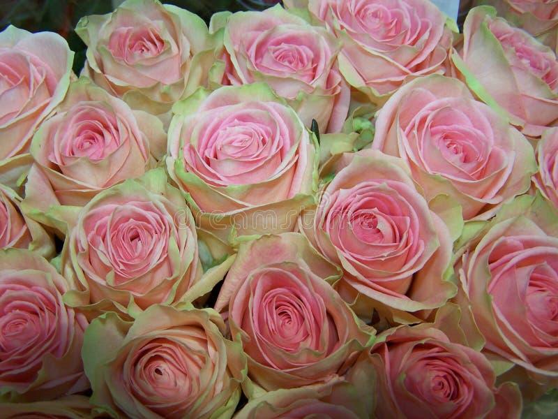 Mazzo delle rose verdi rosse immagini stock