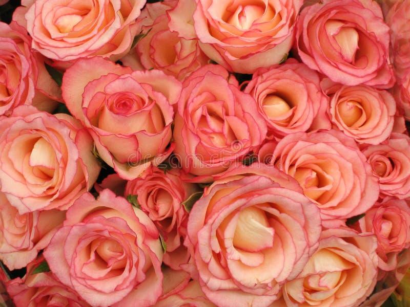 Mazzo dentellare delle rose immagini stock