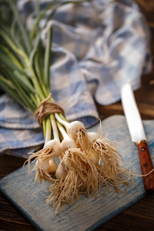 Mazzo di aglio fresco fotografia stock libera da diritti