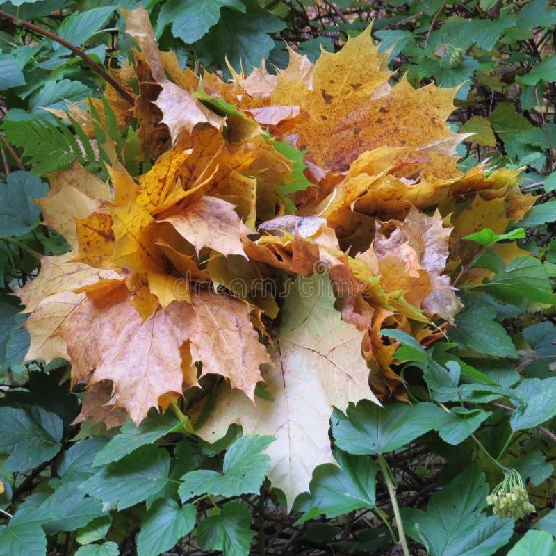 Mazzo di autunno immagine stock