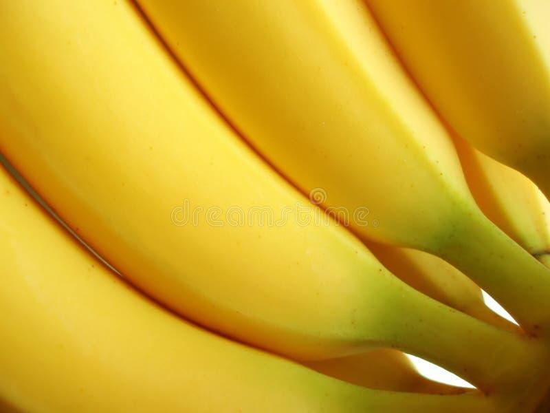 Mazzo di banane gialle fotografia stock libera da diritti