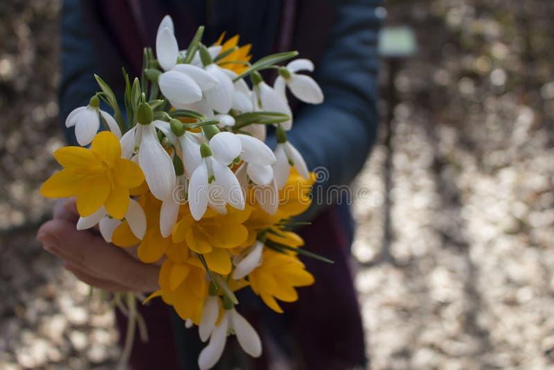 Mazzo di bei fiori della molla immagine stock